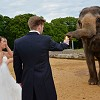 Weddings at Woburn Safari Park